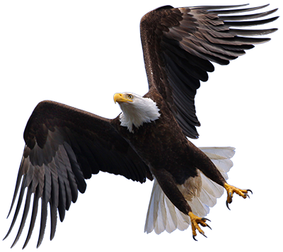 flying-eagle.png